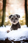 Enjoying the snow by MGreinerArt