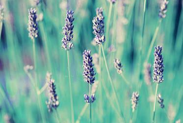 Lavender by outrageouslyweird-me