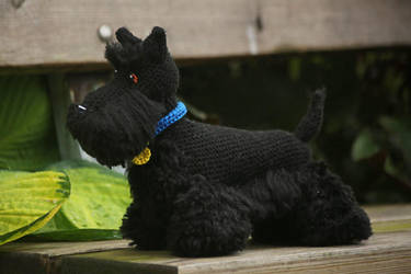 Buster the Scottish terrier by novablue