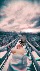 Bird Realms by AdamSchraderDesign