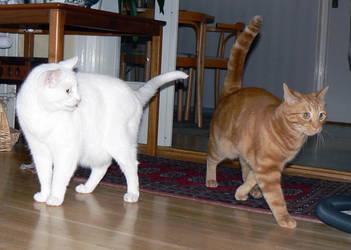 Cat Stock 007 by JoalitaLadyStock