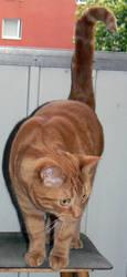 Cat Stock 010 by JoalitaLadyStock