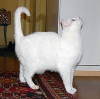 Cat Stock 003 by JoalitaLadyStock
