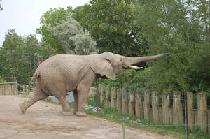 elephant 0107 by stocklove