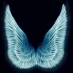 wings by kj117a11
