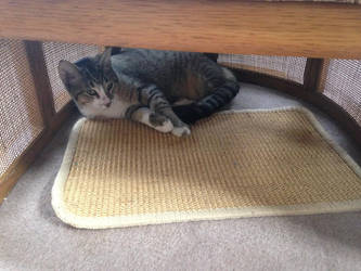 One of my 3 pet cats under a chair with a mat by dth1971