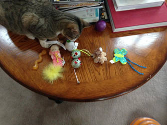 Cat toys which I gave to my pet cats at Christmas by dth1971
