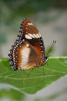 butterfly by bleu3t