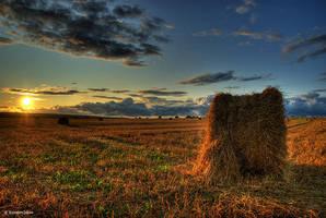 Harvest times by dakotan