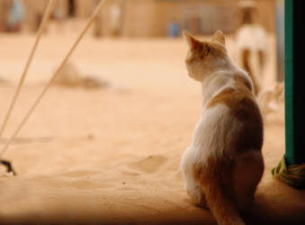 Sahara 7 by SaraBunny