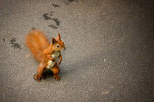 Squirrel 1 by Castia