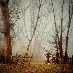 broken hedge by EbruSidar