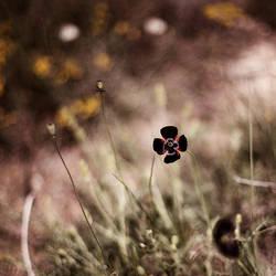 crazy little black by EbruSidar