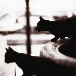 dark hunters by EbruSidar