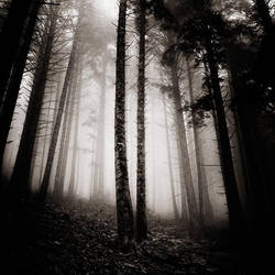the light inside us by EbruSidar