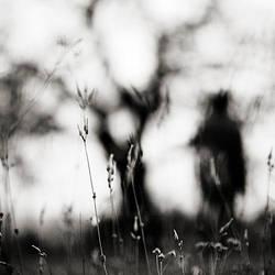 fading away by EbruSidar