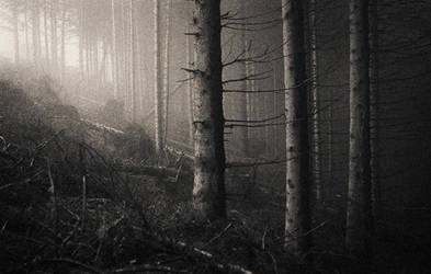 the Ensemble of Silence by EbruSidar