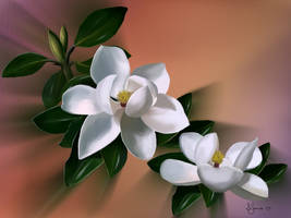 Magnolias by Sillybilly60