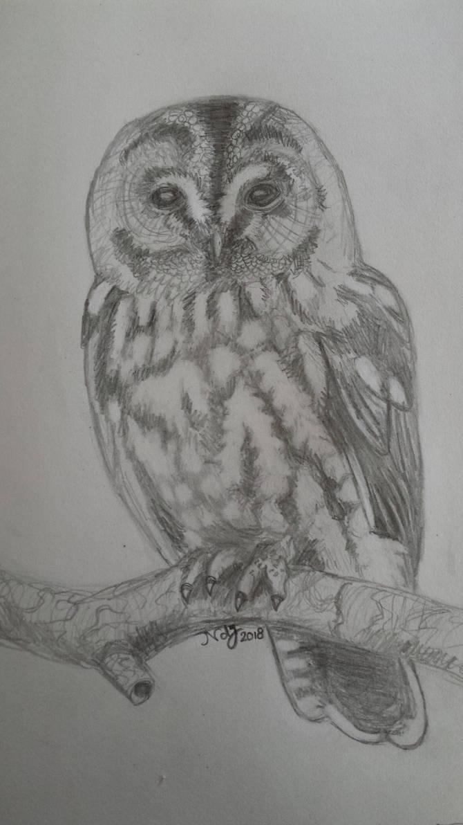 Owl by FaroSamor