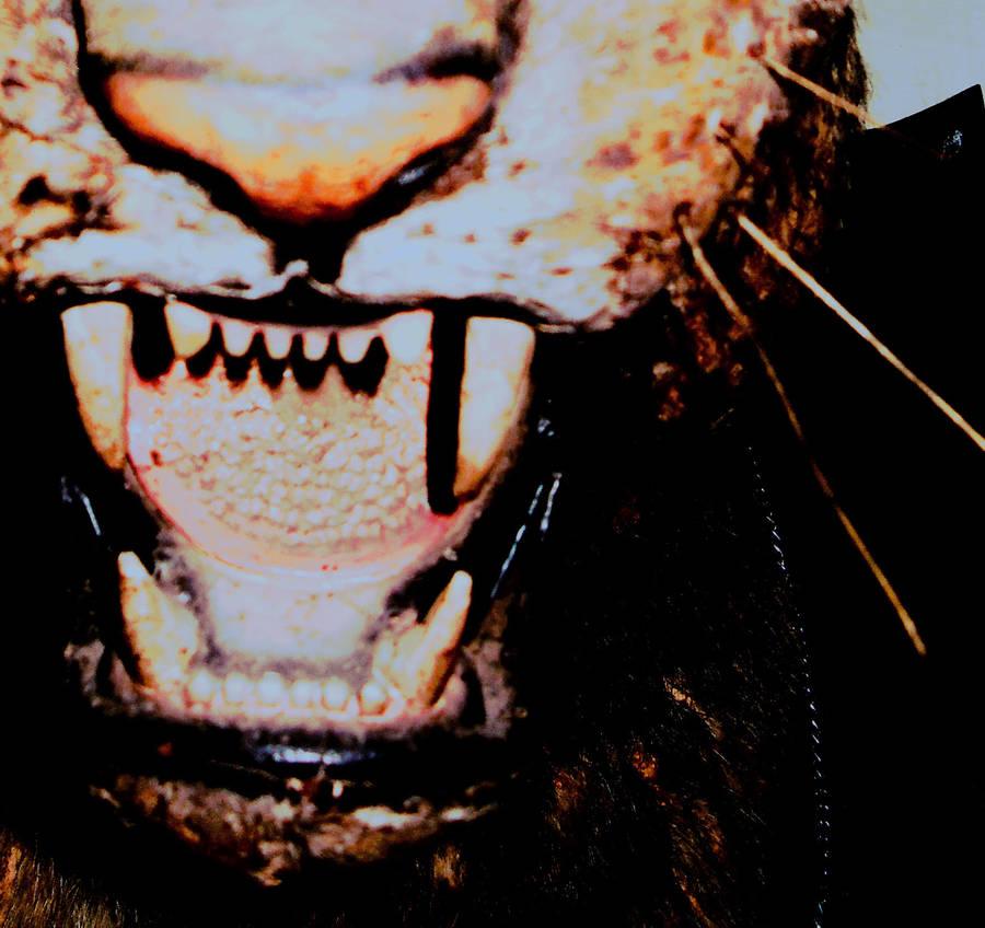Tigerface by natsugo