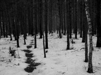 Dark winter forest by TakitamIdiota