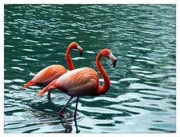 pink floyd blue water by philcopain