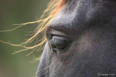 Horse eye by philcopain