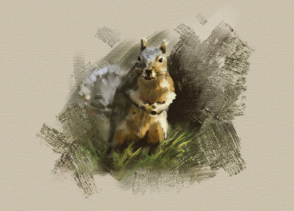 Squirrel by arisuonpaa