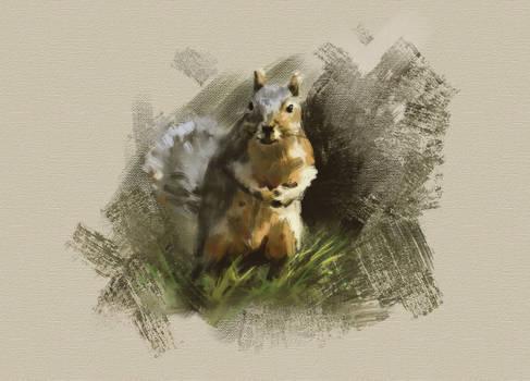 Squirrel by arisuonpaa