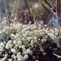 Flowers by UnfinishedSympathy
