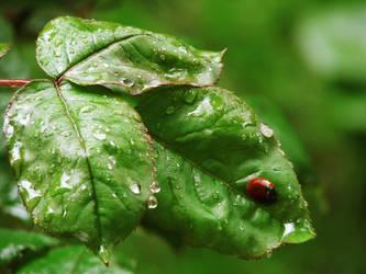 Ladybug by ideea