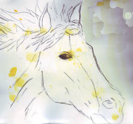 horse head by Duff-Rocks