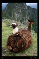 Baby Llama by RFrogz