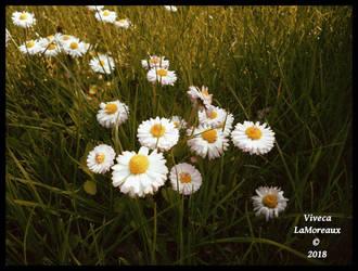 retour du printemps by VivecaLaMoreaux