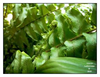 ma petite plante by VivecaLaMoreaux
