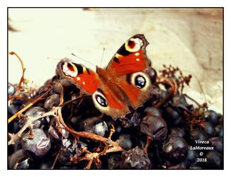 le papillon by VivecaLaMoreaux