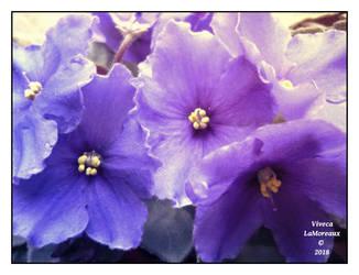 mes petites fleurs mignonnes by VivecaLaMoreaux