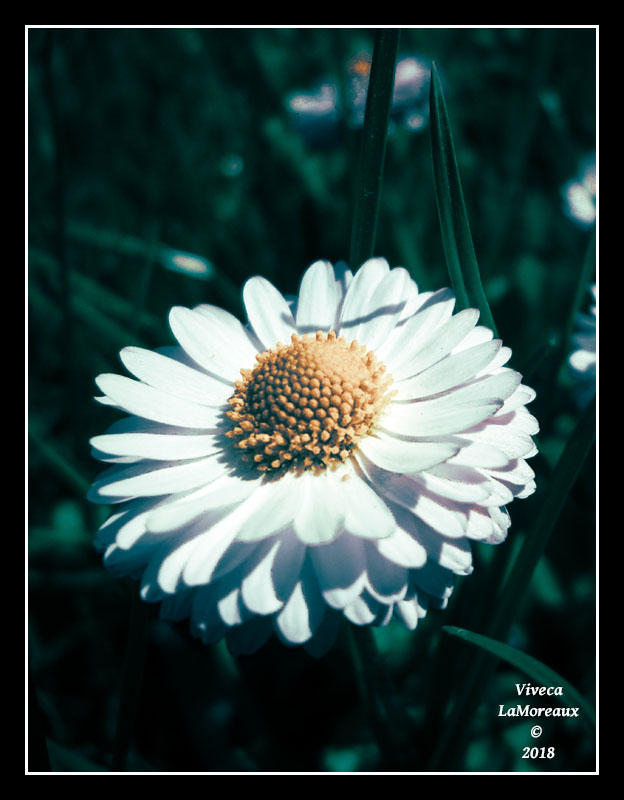 La Fleur Unique By Vivecalamoreaux On Deviantart
