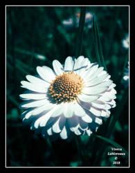 la fleur unique by VivecaLaMoreaux