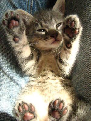 kitty wants a hug by acidburnbaka