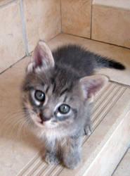 Kitty by acidburnbaka