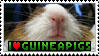 Guineapig Stamp by Siobhan68