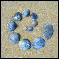 Shell Spiral by Siobhan68