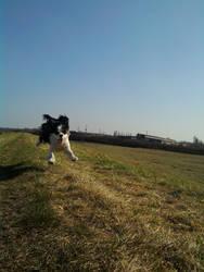 Flying by Bajni