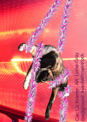 Cirque du Chat facebook cat by lethe-gray