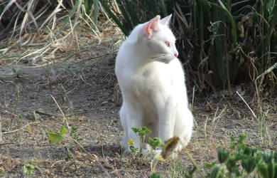 Feral White Kitty by lethe-gray