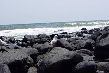 Stock : Seagull at the beach 3 by Deaths-stock