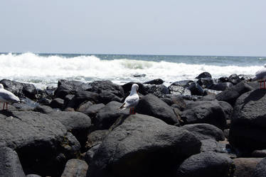 Stock : Seagull at the Beach 2 by Deaths-stock