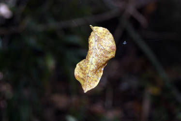 Stock : Leaf Caught by Deaths-stock