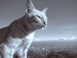 Beware of Cat by quadrajet988